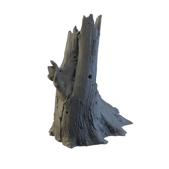 09 Cedar Stump