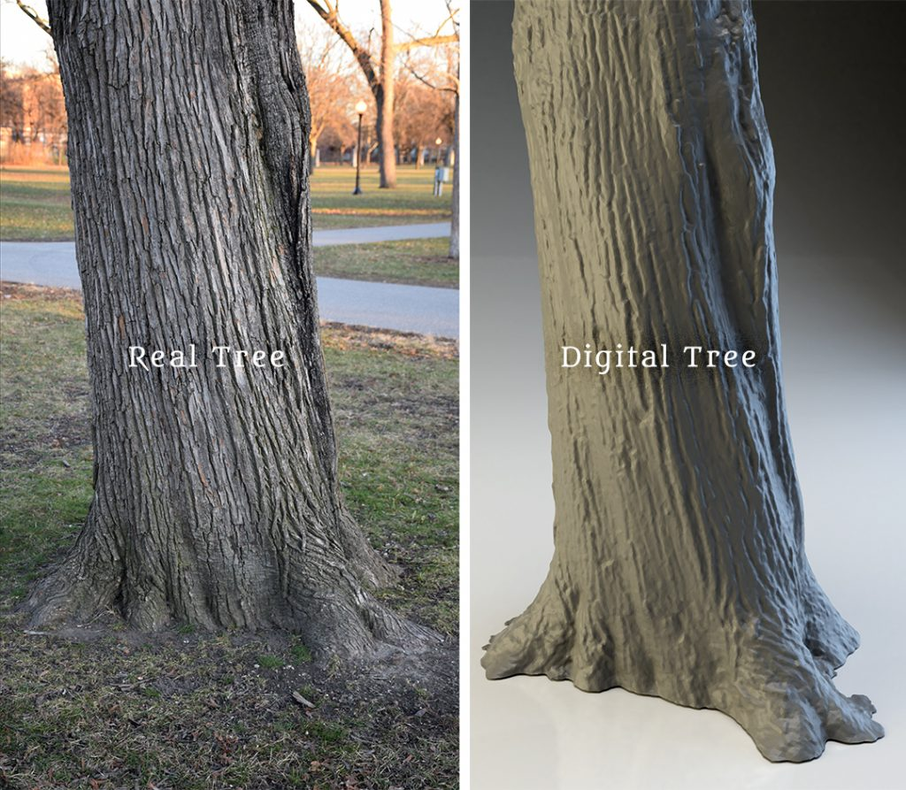 A comparison between a real tree and the digital recreation of the same tree.